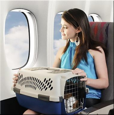 Dog travel kennels IATA